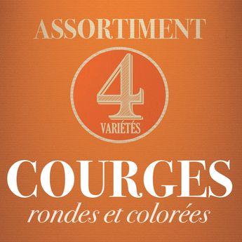 ASSORTIMENT DE COURGES : RONDES & COLOREES