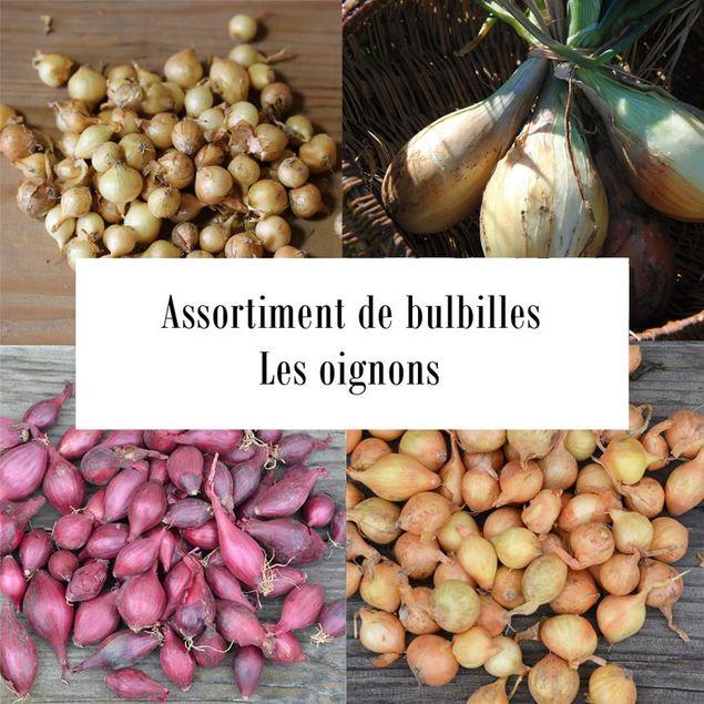 ASSORTIMENT DE BULBILLES D´OIGNONS