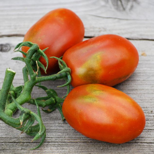 TOMATE PRUNE NOIRE AB