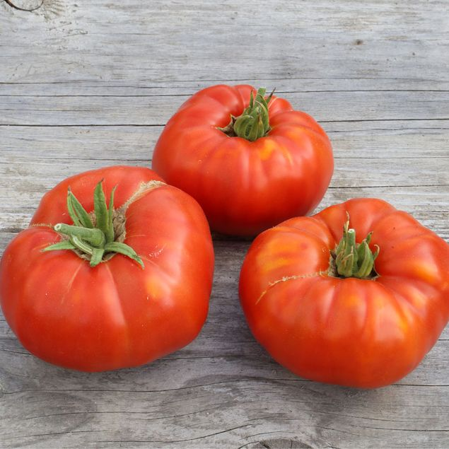 TOMATE RUSSE AB