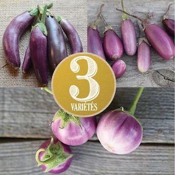 AUBERGINES EN MELANGE (Little finger, Pusa purple cluster, Thaï lavender) AB