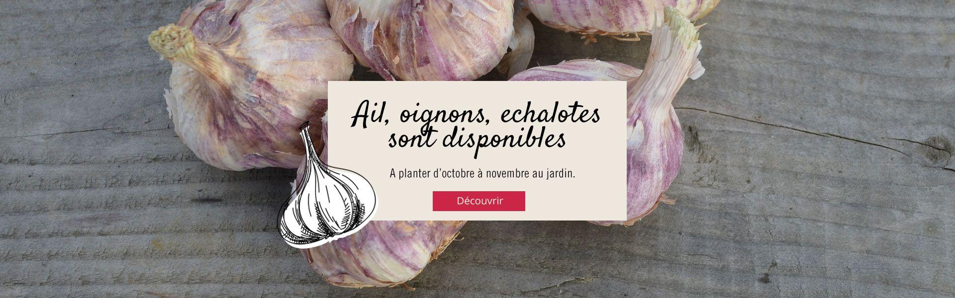 Ail, oignons et echalotes sont disponibles