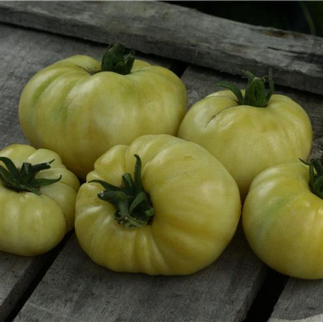 TOMATE BEAUTE BLANCHE AB