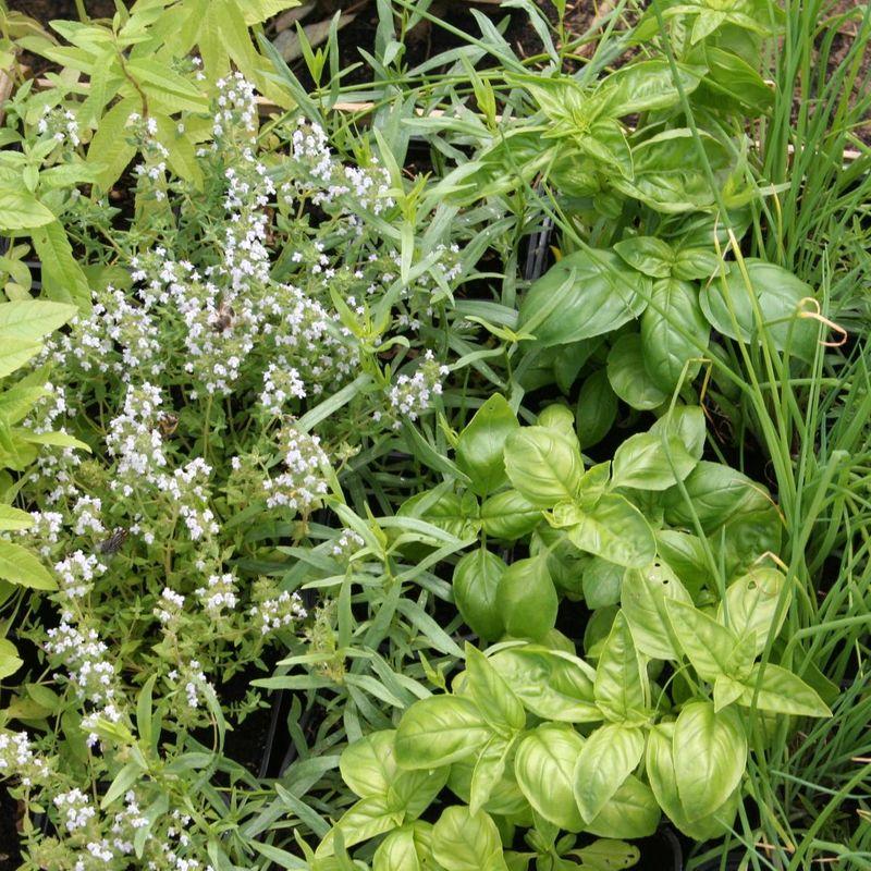 Reussir La Culture Des Plantes Aromatiques Et Condimentaires Ferme